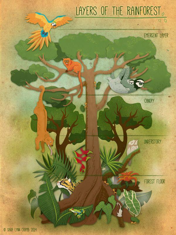 Layers of the Rainforest by Sara Lynn Cramb, via Behance