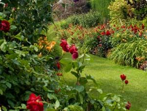 How to Care for Roses - Rose & Flower Gardening - Miracle-Gro