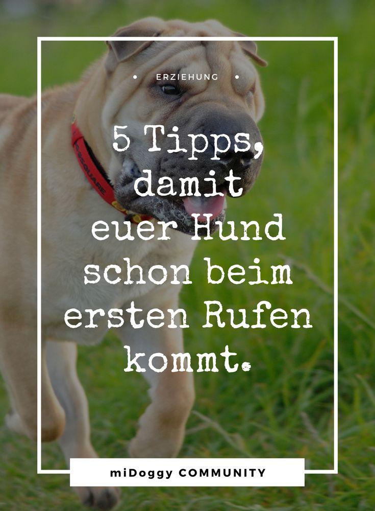    #Hund    Ideen    #Hunde    Tipps    Tricks    Ideen    Liebe    Welpen    Bilder    #Erziehung