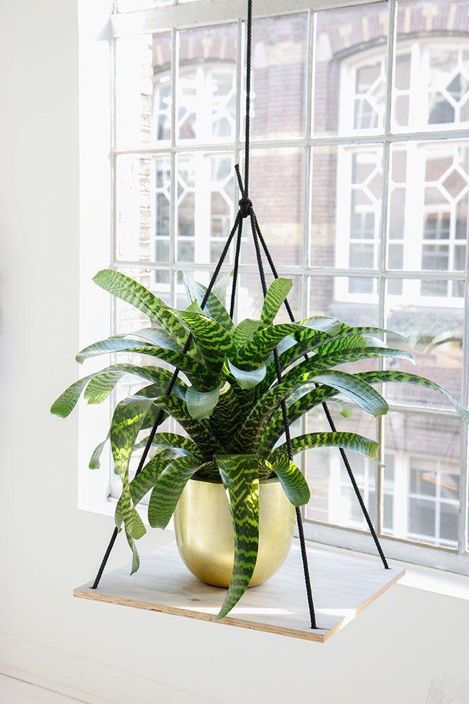 Hangen 3.0 #planten #mooiwatplantendoen via From Ezter with Love