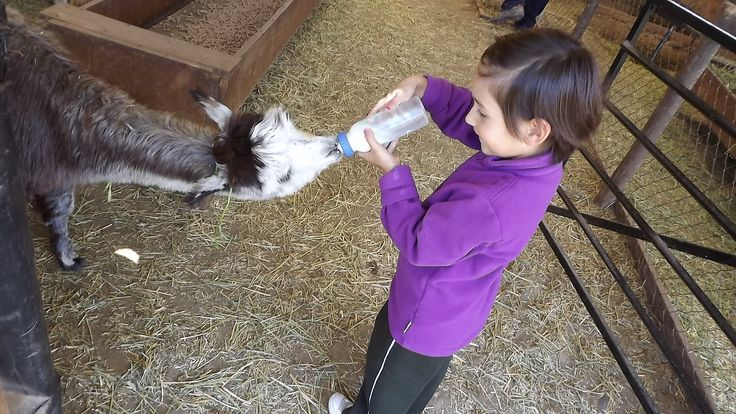 Helena feeding Baby Suri