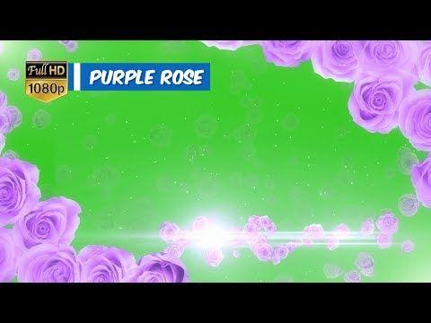 Wedding title ceremony purple rose background green screen