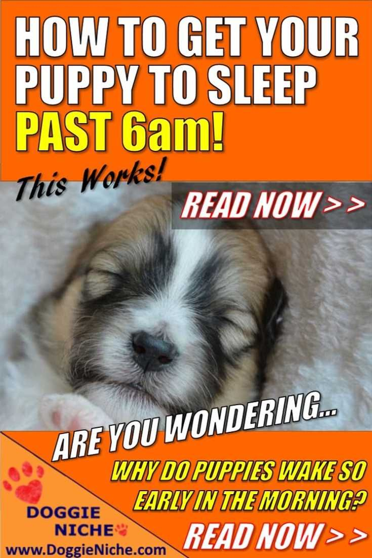 How To Get Your Puppy To Sleep Past 6am Sleeping Puppies Dog Care Tips Puppies
