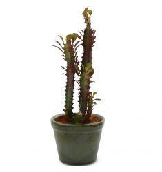 Euphorbia Trigona Rp 40,000