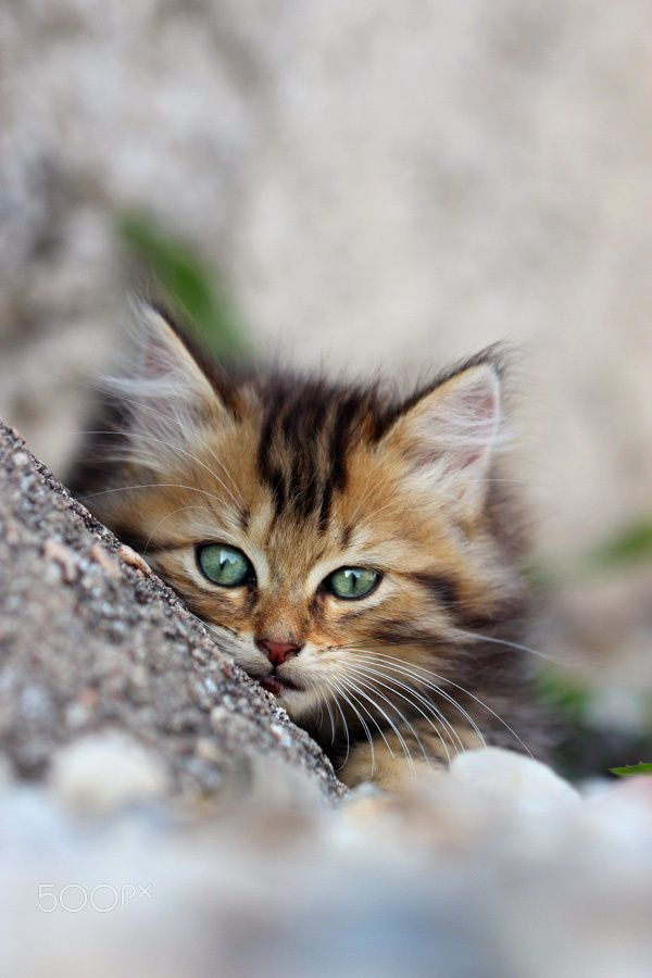 107547 best images about cats and kittens group board on