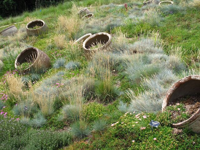 1000 images about seattle on pinterest gardens 4 h and for Low mounding ornamental grasses