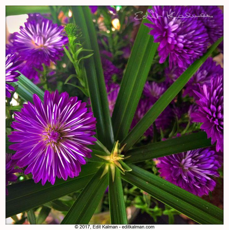 Choices #Autumn, #Choice, #Fall, #Flower, #Green, #Leaves, #Love, #Nature, #Plant, #Quote - https://goo.gl/UCdnD8