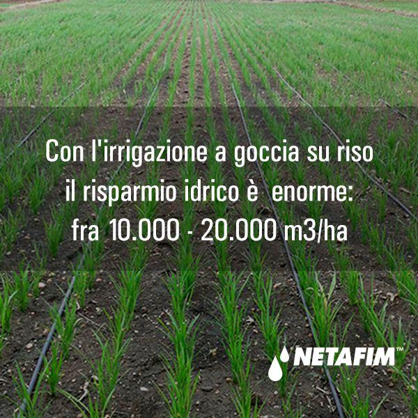Aiutaci a sostenere il pianeta, sposa una #agricoltura sostenibile per ridurre inquinamento e risorse.