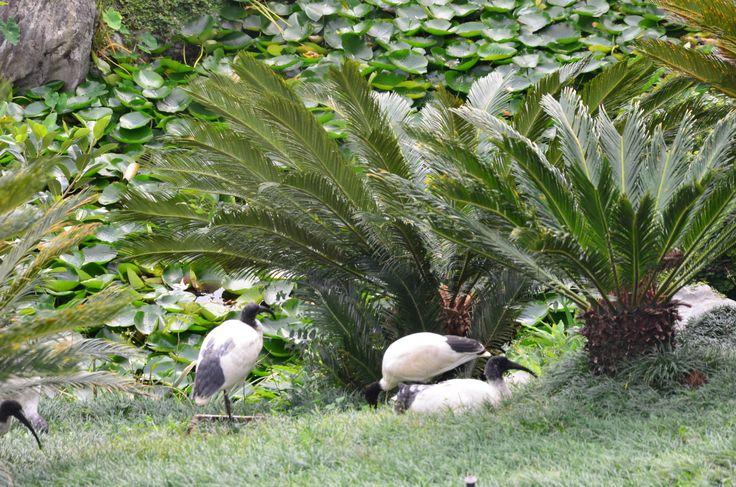Chinese Garden of Friendship Darling Harbour, Sydney, Nouvelle-Galles du Sud.
