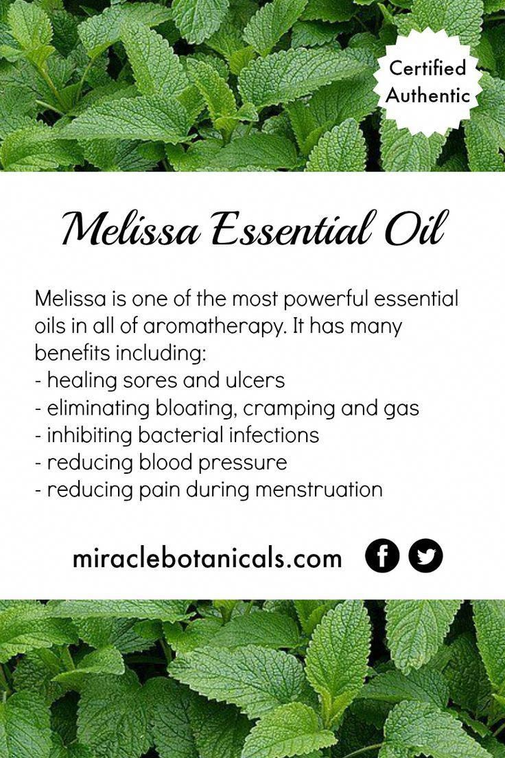 Melissa essential oil is one of the most powerful essential oils in aromatherapy …