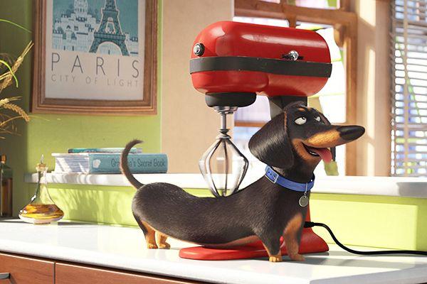 Pets – A Vida Secreta dos Bichos – 2016 nos cinemas