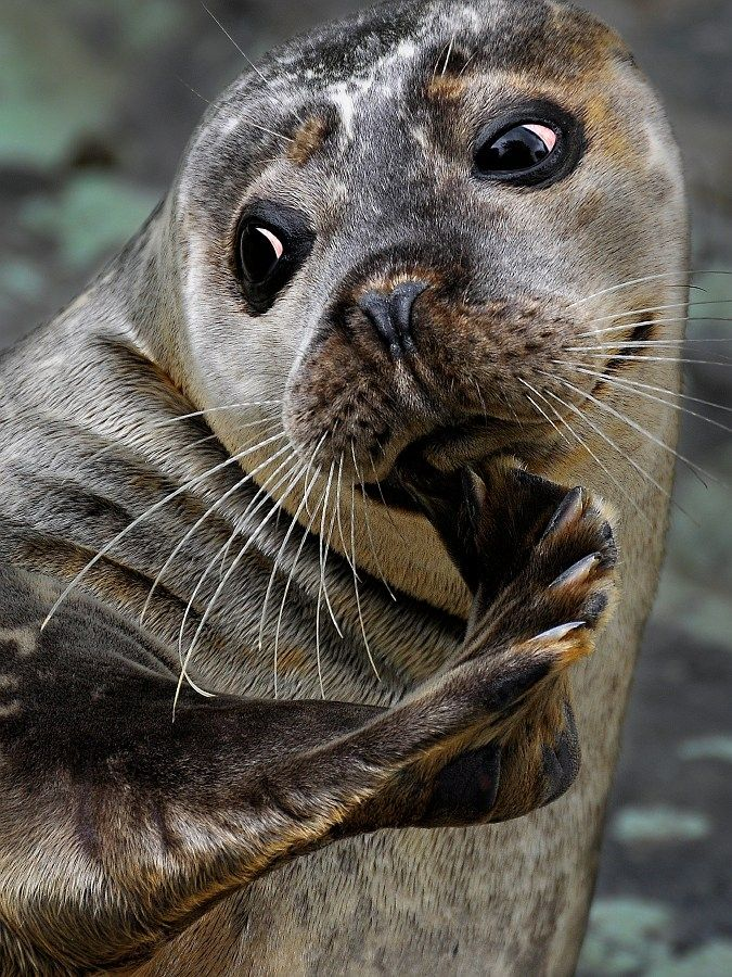 #seal this one even has my eye liner