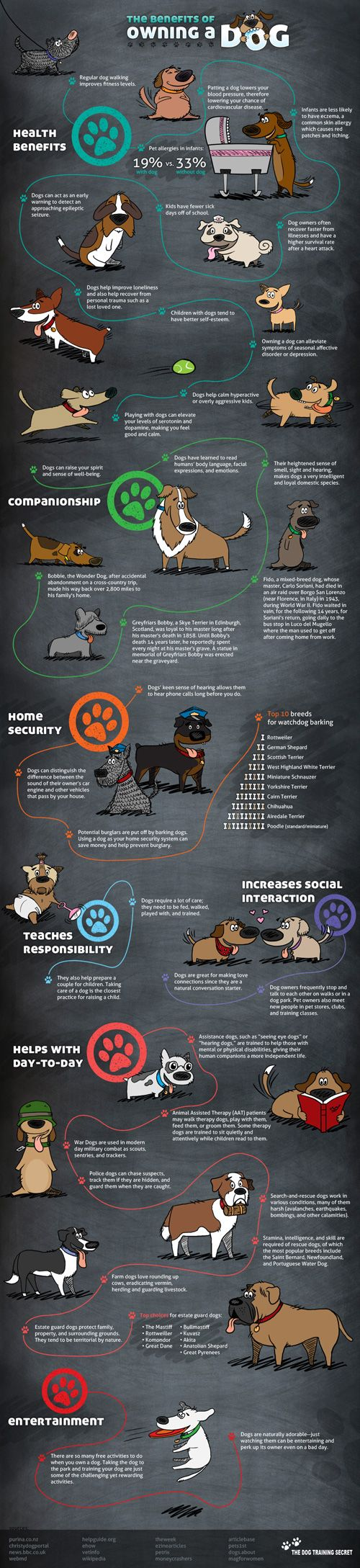 Owning a dog (or another pet) is good for you! This infographic provides some great reasoning if you are thinking about getting one.