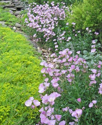 find this pin and more on ground cover - Ground Cover Ideas