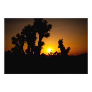 """The Arizona Desert"" photo print by Sean G. Marjoram #photography #zazzle"