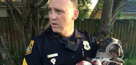 Angeschossener Hund in Florida: Die Rettung von Cabela - SPIEGEL ONLINE - Nachrichten - Panorama