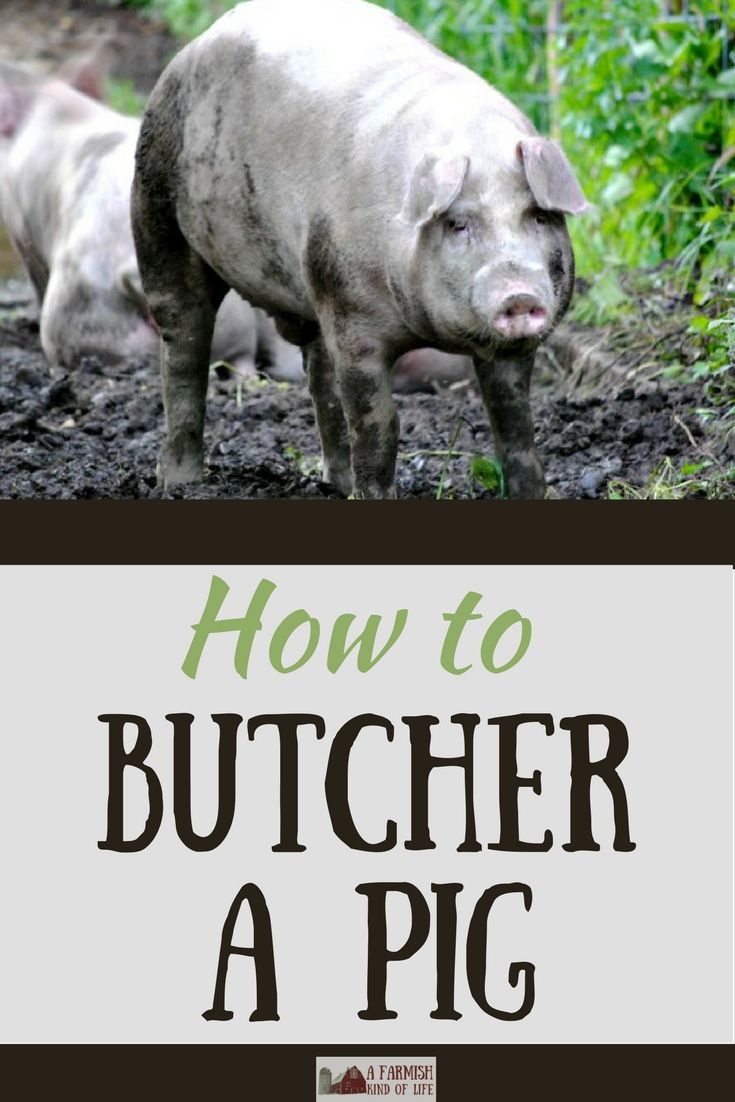 25 best pigs on the homestead images on pinterest farm