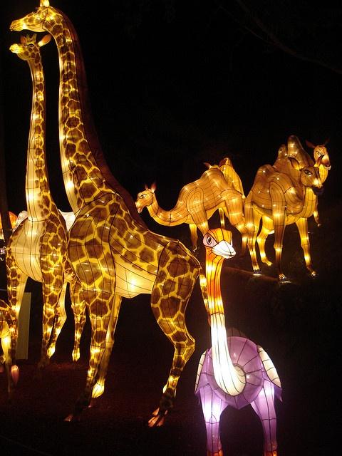 Lantern Festival Toronto