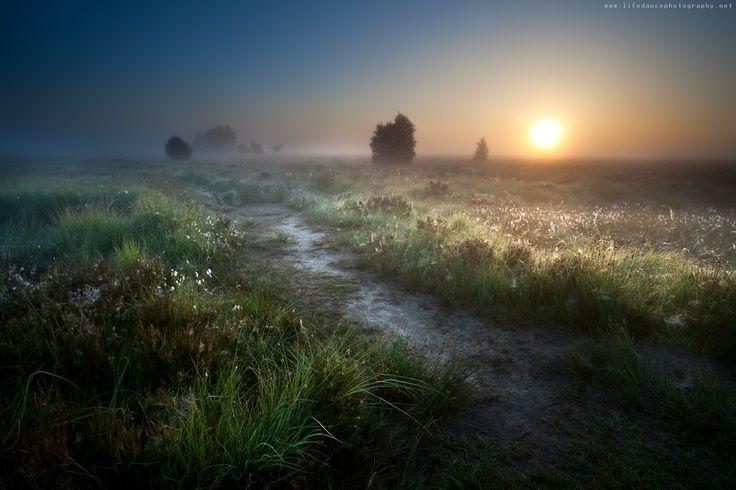 Fochteloerveen, Drenthe, The Netherlands. #greetingsfromnl