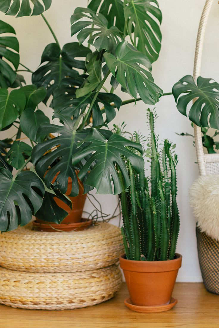 Plant Care For Beginners — Black & Blooms in 2020 Plant