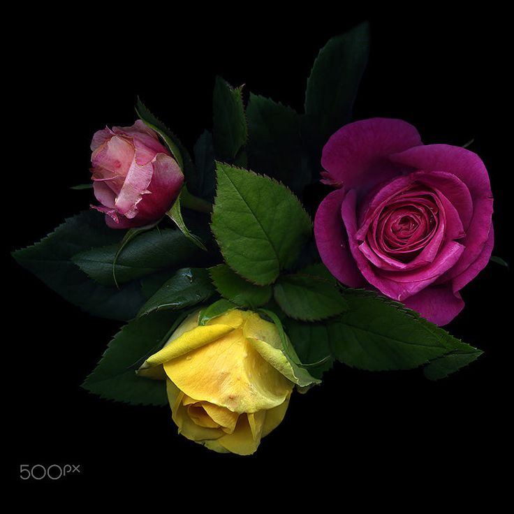 DID I PROMISE YOU A ROSE-GARDEN? by Magda Indigo on 500px