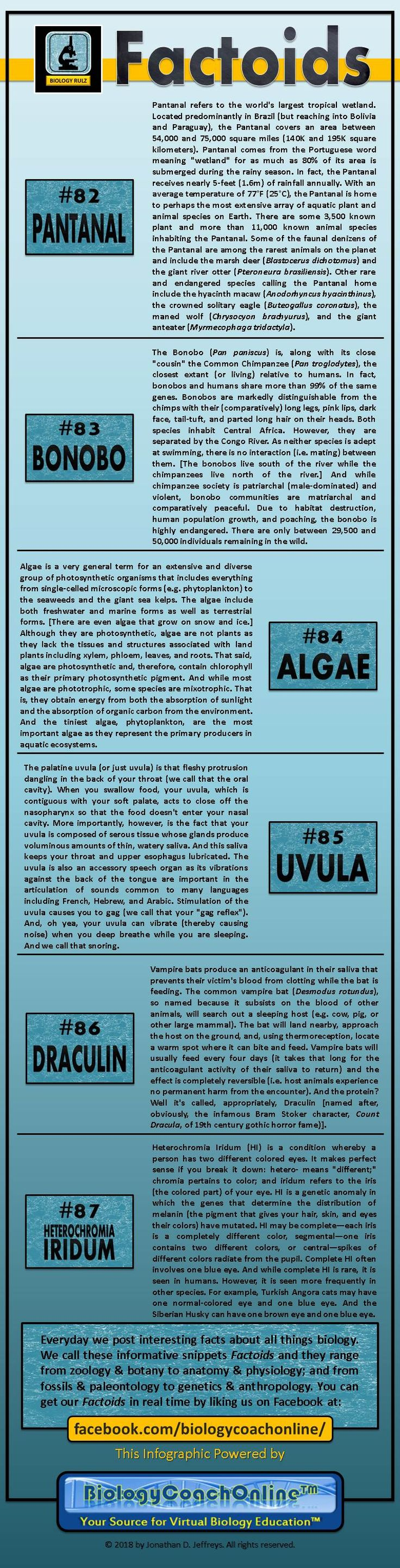 7 best human biolagy images on Pinterest   Biology teacher ...