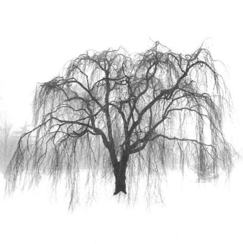 Weeping Willow Tree Black And White Tattoo tattoo wheeping...