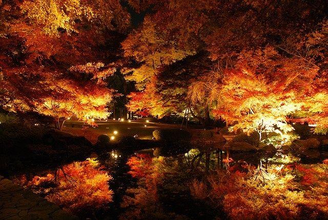 京都とはひと味ちがう風情がある。ライトアップが華やかな都内の紅葉スポット4選 | by.S