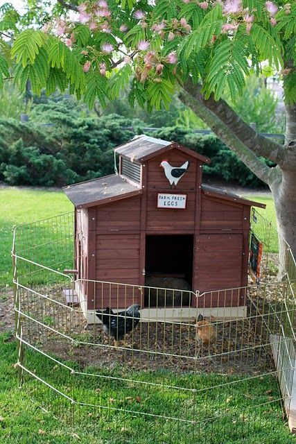 how to keep skunks out of the chicken coop