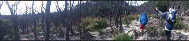 Pendaki hutan mati
