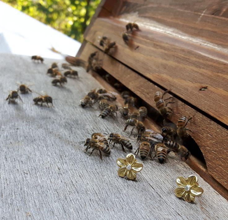Unsere Bienen sind Gold wert! Seit Anfang des Jahres sind wir stolze Besitzer eines Bienenvolkes und um mehrere Kilo goldfarbenen Honigs reicher. Die Blütenohrstecker aus 750/- Gelbgold mit Brillanten beeindruckten unsere Bienen nicht, aber vielleicht Sie / Euch??