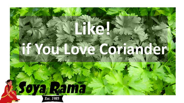 Let us know what you think of Coriander ... Friend or Foe? #coriander #veganfood #herbs
