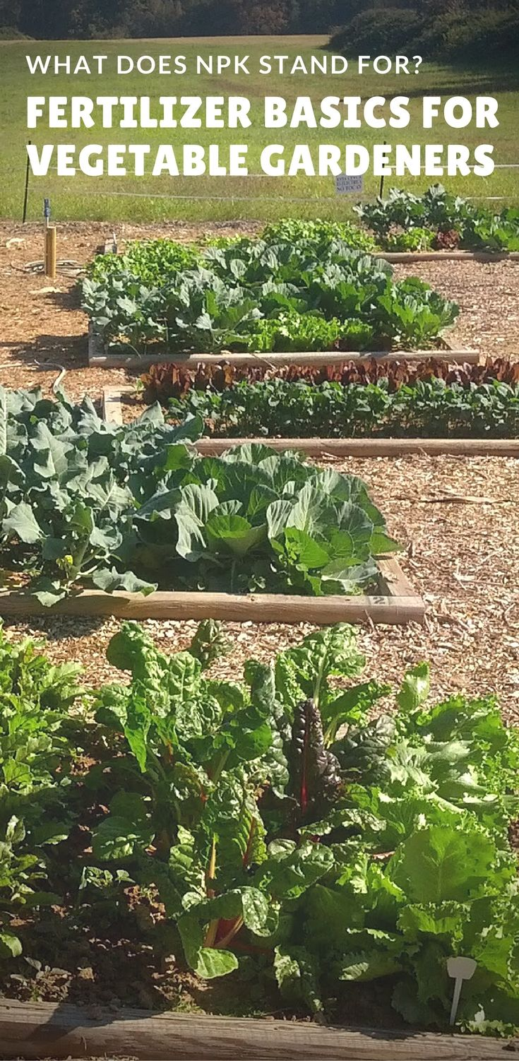 Backyard vegetable gardens. What does NPK stand for? Fertilizer basics for vegetable gardens and gardening via @youshouldgrow