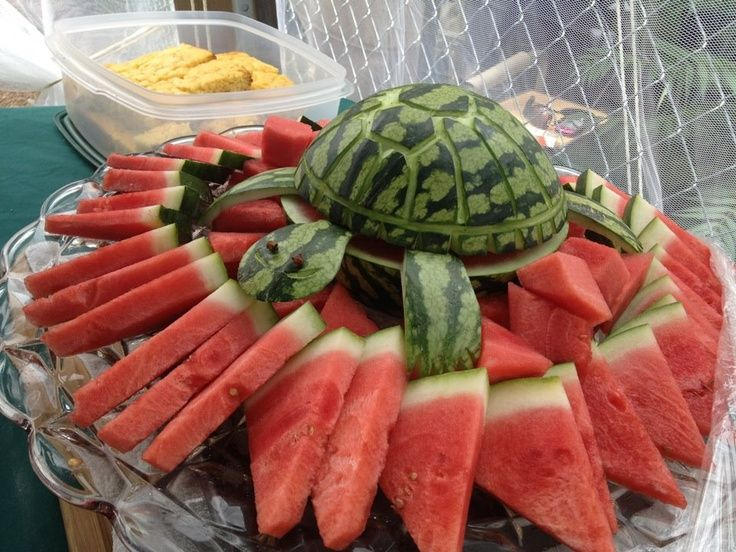 watermelon turtle | Watermelon Turtle