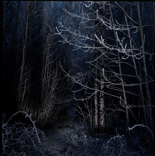 """Search """"forest, night"""" Free Photos & Stock Images - Visual Hunt"""