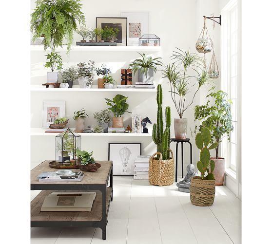 Imitat eingemachte größere Kletten-Zimmerpflanze