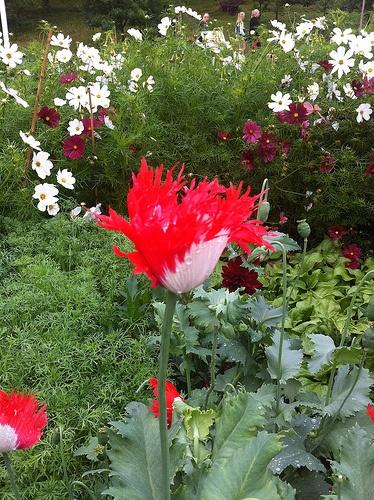 #WijTrädgårdar #Ockelbo