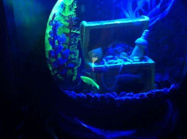 9 best gadgets i want images on pinterest fish aquariums for Glow fish tanks