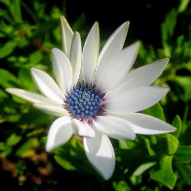 Flor en parque Playa del Sol  Viña del Mar 2014 Foto cámara Canon Powershot 550SD macro  #flor #flowers