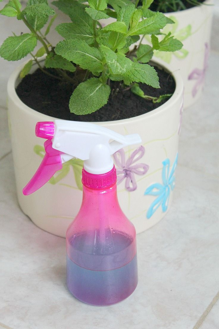 DIY Natural window cleaner - Clean your windows the healthy, safe way, using simple, natural ingredients you probably have on hand!