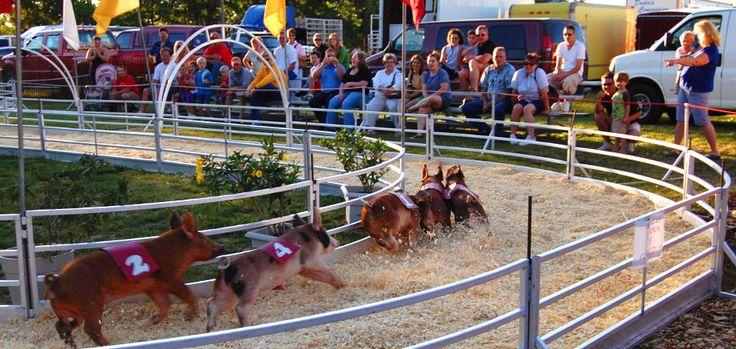 Pig races! Oakland County Fair in Davisburg, Michigan, about 35 miles NW of Detroit (oakfair.org)