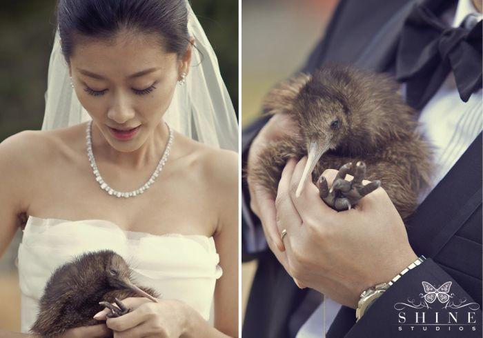 Cape Kidnappers #newzealand #wedding #kiwibird