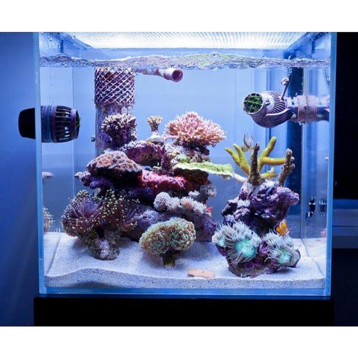 154 Best Awesome Reef Aquascapes Images On Pinterest Reef Aquarium Fish Tanks And Marine Aquarium