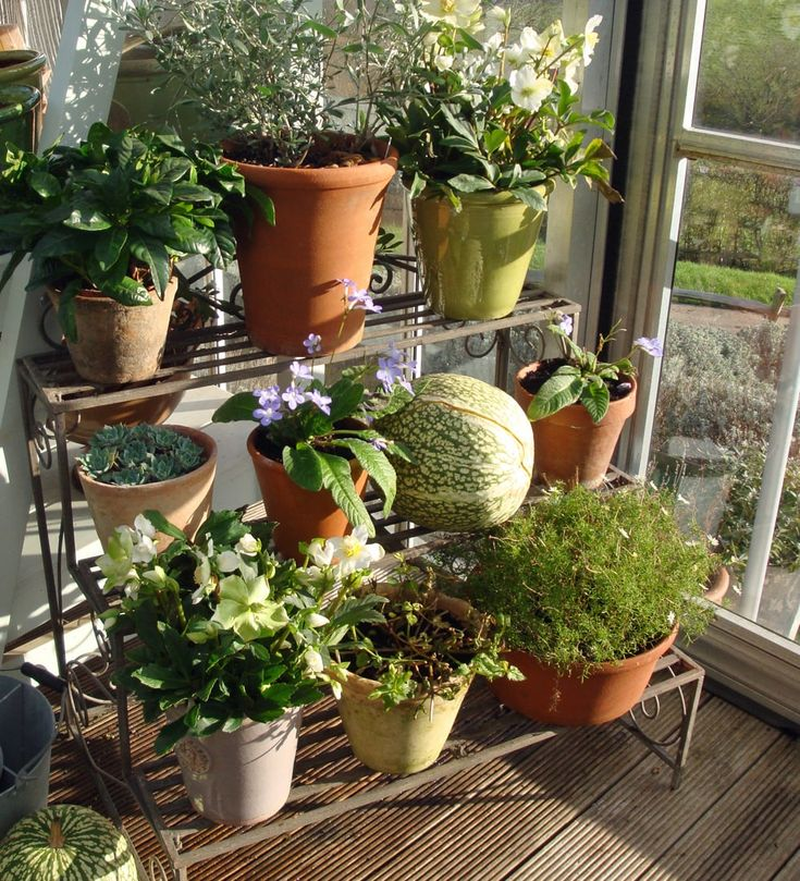 Sarah shows you her favourite plants to grow indoors during the winter months, on her favourite metal plant theatre.