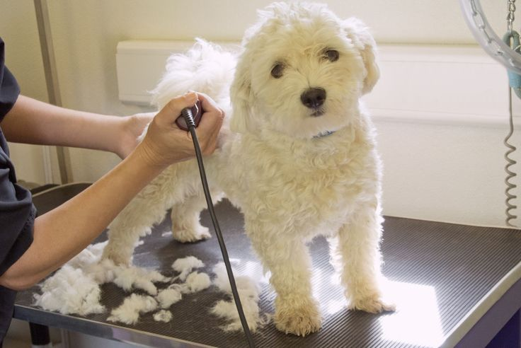 For pet groomers who are considering taking their businesses on the road, here are in-depth tips for starting a mobile pet grooming operation.