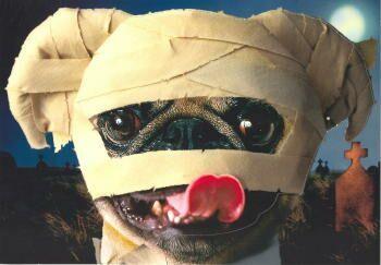 pug mummy
