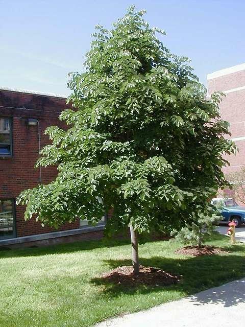 9 Best Ornamental Trees For Zone 4 Images On Pinterest
