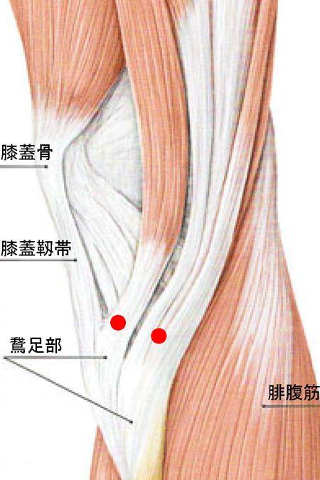 私の治療の仕方 痛くない鍼の秘密 トリガーポイント理論 腰痛症の治療 ヒザ関節症の治療 伊礼鍼灸院