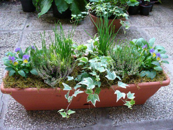 A forróság elmúltával a muskátlik új erőre kaptak az erkélyeken, de az egynyári növények többsége már nem tündököl. Ideje szép lassan leváltani a nyári virágokat és az ősz színeivel felöltöztetni a balkont. Jól megválasztott növények összeültetésével hónapokkal meghosszabbíthatjuk a balkonszezont.