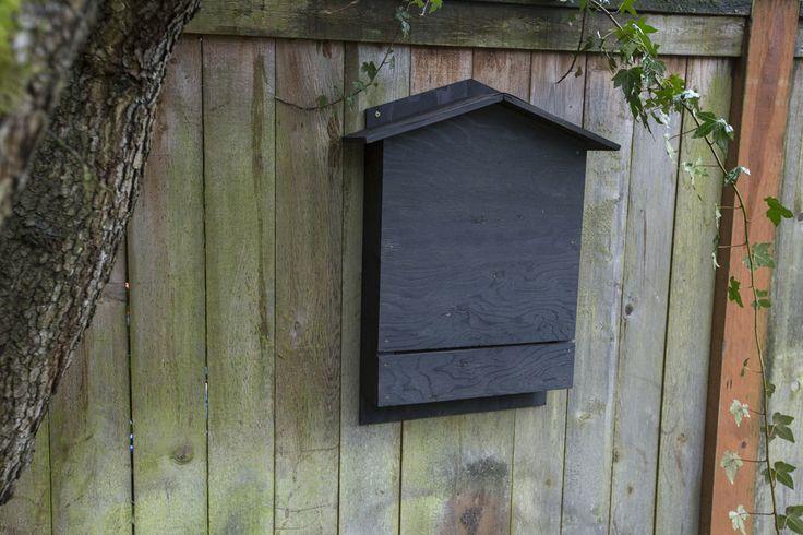 best 25 bat box ideas on pinterest